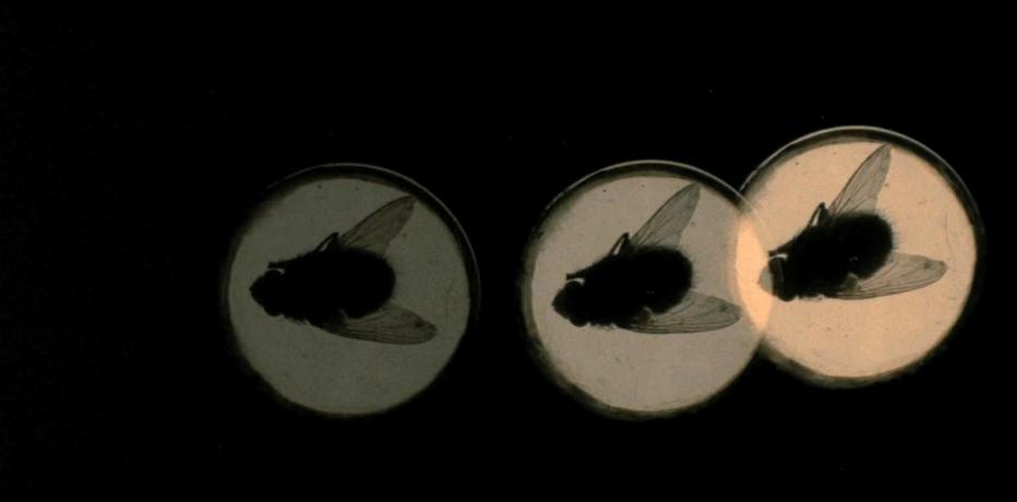 Risultati immagini per quattro mosche di velluto grigio film