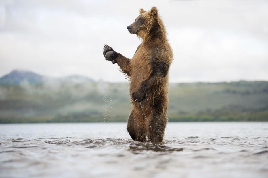 terre-des-ours-2014-guillaume-vincent-05.jpg