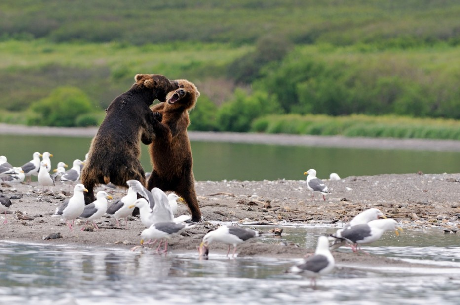 terre-des-ours-2014-guillaume-vincent-07.jpg