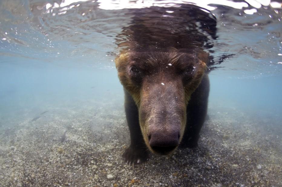 terre-des-ours-2014-guillaume-vincent-08.jpg