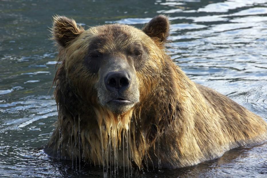 terre-des-ours-2014-guillaume-vincent-09.jpg