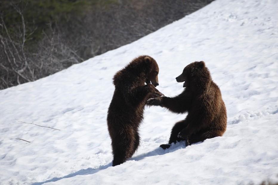 terre-des-ours-2014-guillaume-vincent-12.jpg