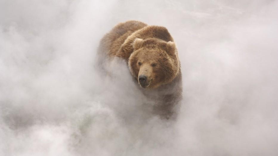 terre-des-ours-2014-guillaume-vincent-13.jpg