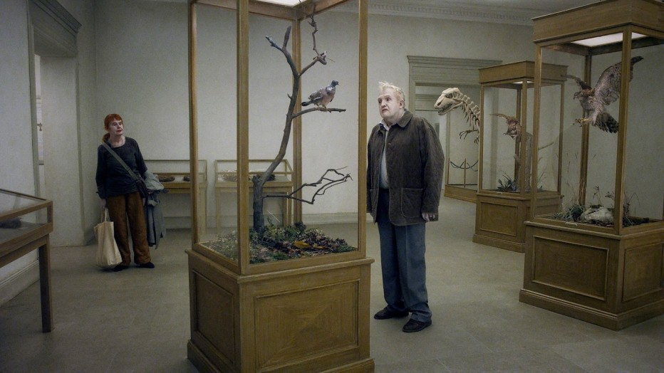 a-pigeon-sat-on-a-branch-reflecting-on-existence-01.jpg