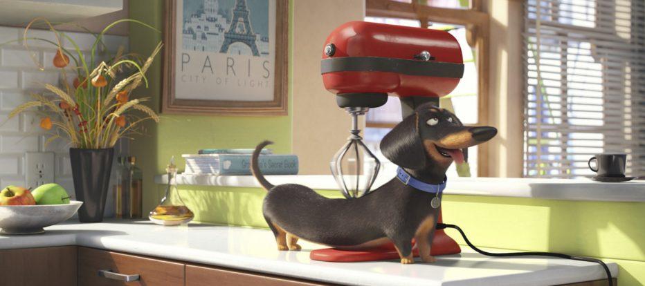 Pets-Vita-da-animali-2016-The-Secret-Life-of-Pets-23.jpg