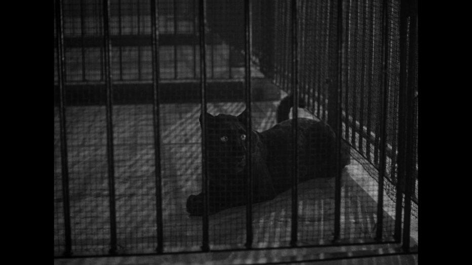 il-bacio-della-pantera-1942-cat-people-jacques-tourneur-09.jpg