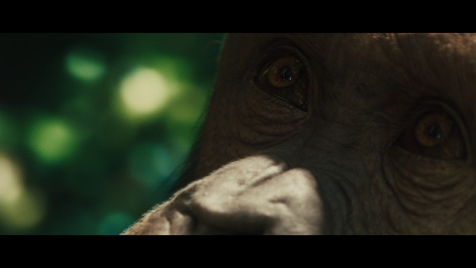 l-alba-del-pianeta-delle-scimmie-2011-rupert-wyatt-12.jpg