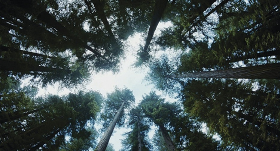 the-tree-of-life-2011-terrence-malick-50.jpg