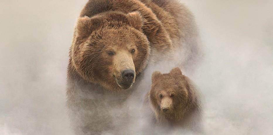 La terra degli orsi 2014 g vincent recensione for Affittare una cabina nel grande orso