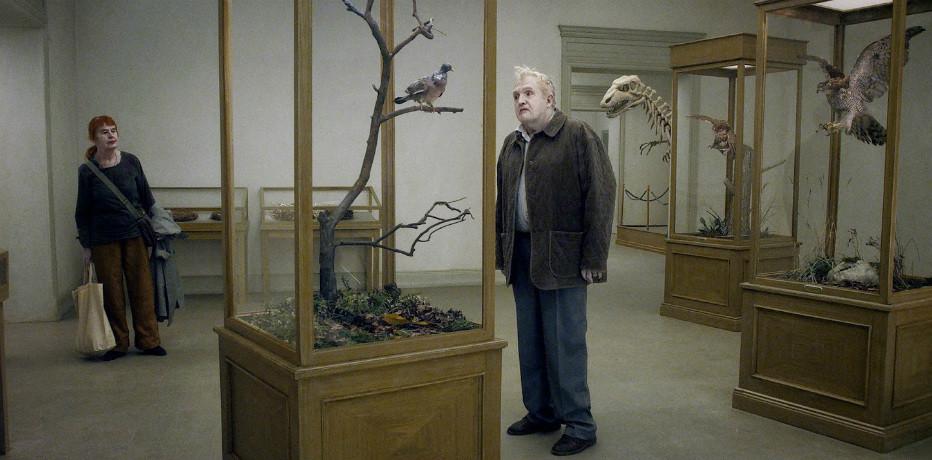 Un piccione seduto su un ramo riflette sull'esistenza Recensione