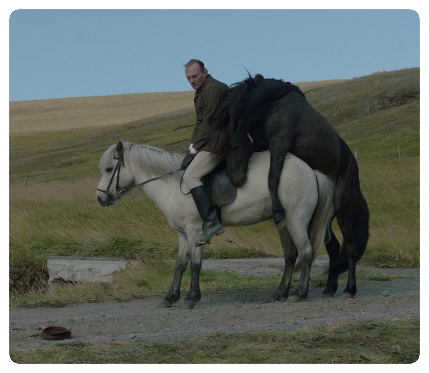 Storie di cavalli e di uomini 2013 recensione for Immagini cavalli stilizzati