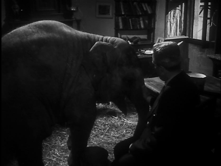 buongiorno-elefante-1952-gianni-franciolini-012.jpg