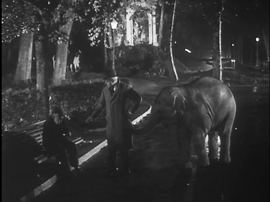 buongiorno-elefante-1952-gianni-franciolini-013.jpg