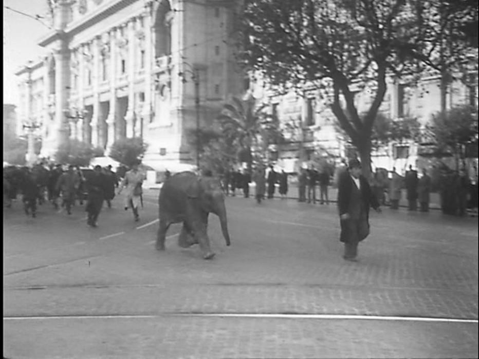 buongiorno-elefante-1952-gianni-franciolini-014.jpg