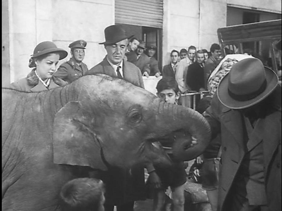buongiorno-elefante-1952-gianni-franciolini-015.jpg