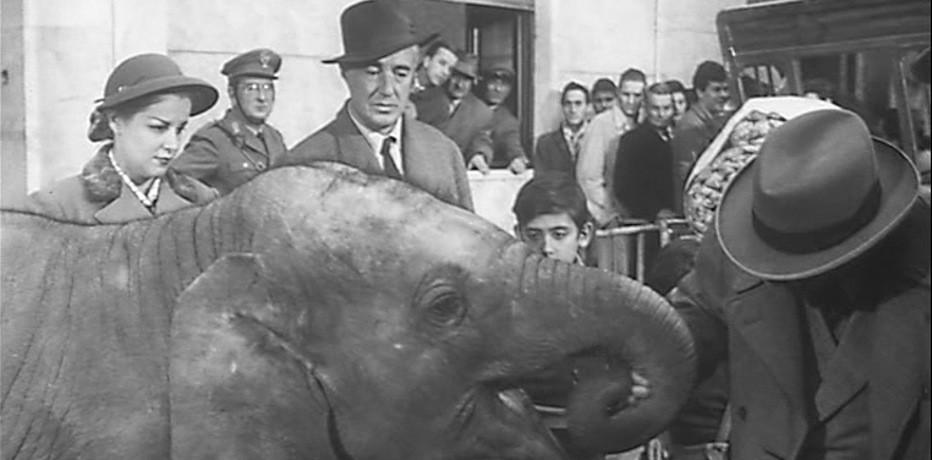 Buongiorno, elefante!