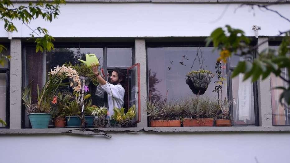 Homo-botanicus-2018-Guillermo-Quintero-004.jpg