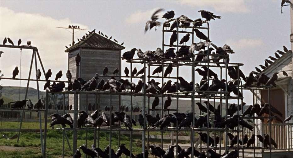 gli-uccelli-1963-the-birds-alfred-hitchcock-recensione-08.jpg