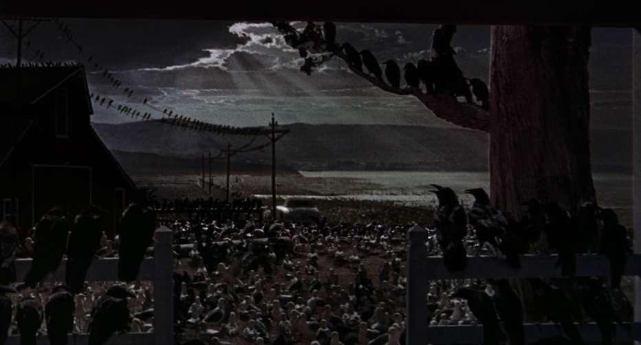 gli-uccelli-1963-the-birds-alfred-hitchcock-recensione-10.jpg