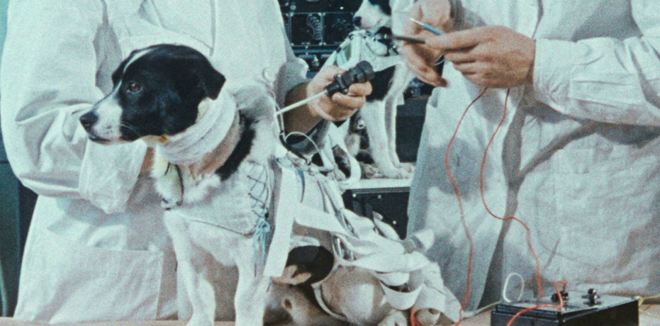 Space Dogs (2019) Elsa Kremser, Levin Peter - Recensione | Quinlan.it