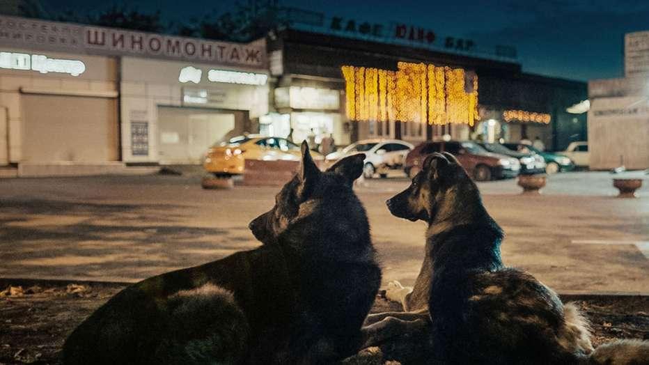 space-dogs-2019-space-dogs-2019-Elsa-Kremser-Levin-Peter-01.jpg
