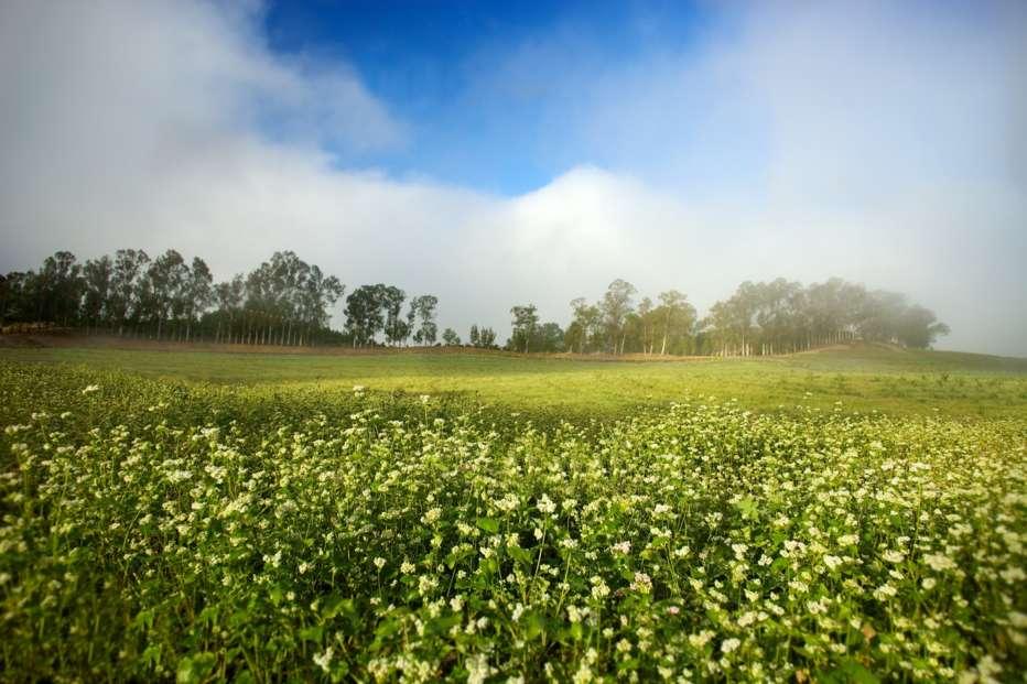 La-fattoria-dei-nostri-sogni-2019-John-Chester-006.jpg