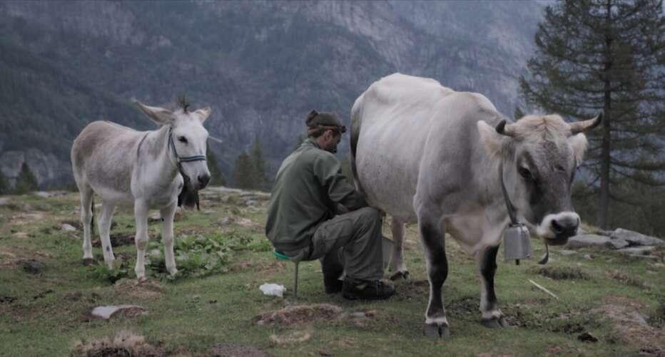 anche-stanotte-le-mucche-danzeranno-sul-tetto-2020-aldo-gugolz-02.jpg